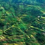 Banaue rizsteraszai