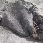 Furcsa, ijesztő állatot vetett partra a víz Új-Zélandon