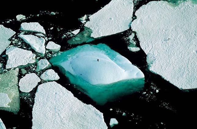 pingvin az Antarktiszon