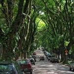 Rua Goncalo de Carvalho – a világ legszebbb utcája