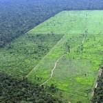 Tovább irtják az esőerdőt az Amazóniában