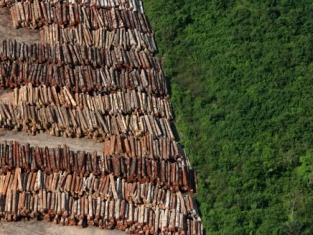 Erdőirtás