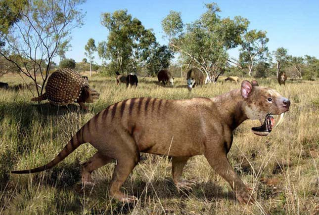Thylacosmilus atrox