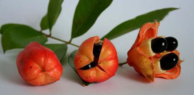 ackee gyümölcs