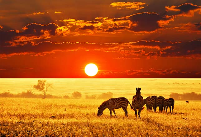 afrikai szavanna