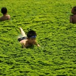 Ismét zölddé változtatta a tengert az algaszaporulat Kínában