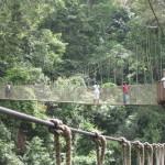 Látványos függőhidak gyönyörű esőerdőkben