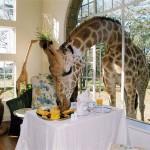 Különleges szállodák az állatok szerelmeseinek