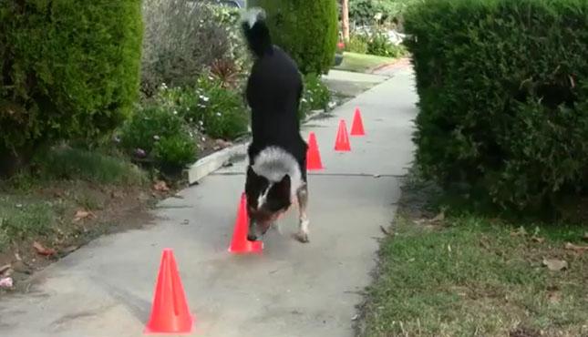kutya-2