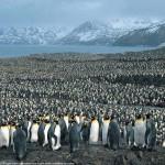 A pingvinek szigete