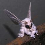 Egy különös állat – a venezuelai pudlimoly