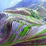 A látványos Hani rizsteraszok