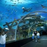 A világ legnagyobb ócenáriuma Szingapúrban