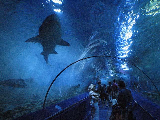 Nyugat-Ausztráliai Akvárium