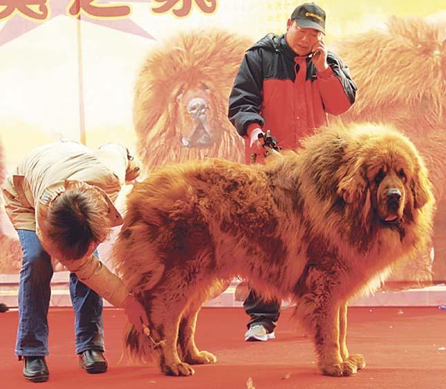 A világ legdrágább kutyája