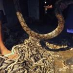 A kígyóbőr-táska készítése Indonéziában