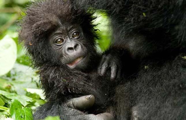 Olajfúrás Kongóban