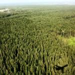Megfulladnak az európai erdők