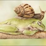 A csiga és a szunnyadó levelibéka esete