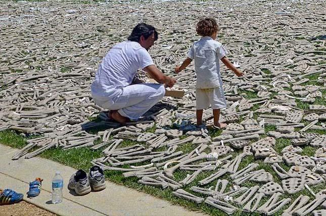 1 millió csont Washingtonban