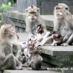 Az Alas Kedaton majomerdő