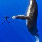 Marco Queral fotós együtt táncolt a hosszúszárnyú bálnákkal