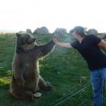Casey Anderson és legjobb barátja Brutus, a grizzlymedve
