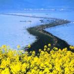 A Jindo sziget csodája