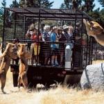 Az új-zélandi Orona vadaspark