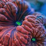 Színpompás korallok – a trópusi óceánok különlegességei