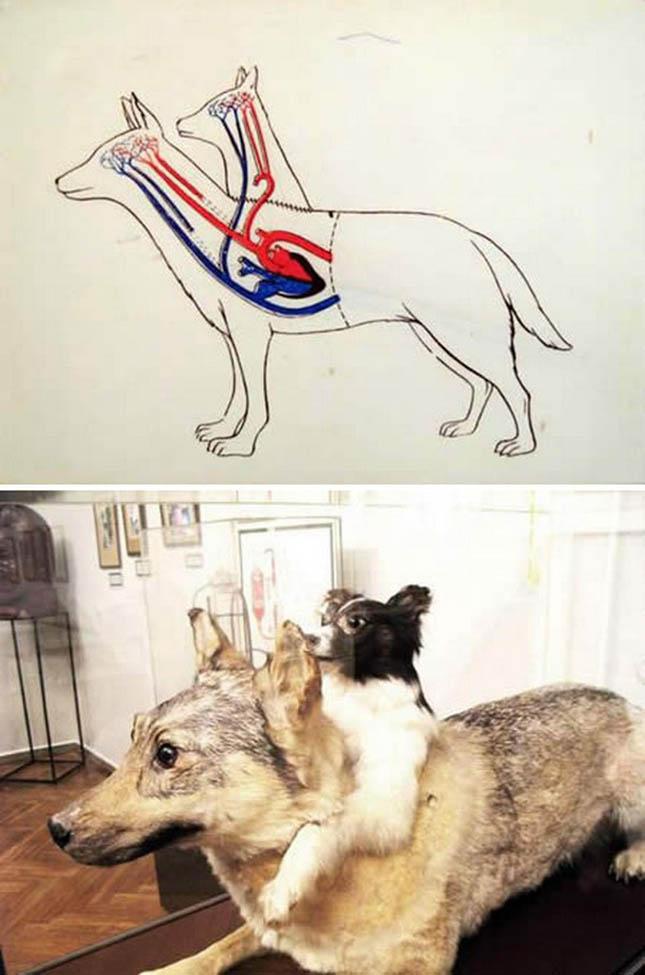 kétfejű kutya