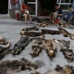 A legnagyobb szőrme piac Kínában, évente 25 millió állati szőr exportjával