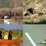 Elképesztő videók állatok segítségnyújtásáról