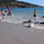 Strandolók mentették meg a delfineket