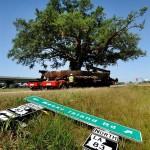Egy 150 éves és 360 tonnás fa költöztetése