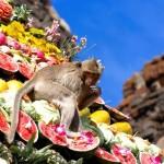 Különös ünnep – a Majombüfé Fesztivál