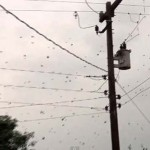 Több ezer pók szőtt hálót egy brazil kisvárosban