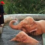 Rózsaszín elefántok Burmában