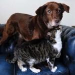 Egy macska vezeti a megvakult kutyát