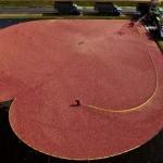 A vörös áfonya látványos betakarítása az Egyesült Államokban