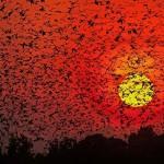 12 fantasztikus fotó hatalmas állatcsoportokról