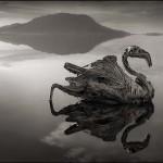 Nátron-tó, ahol kővé válnak az állatok