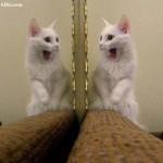 Így reagálnak az állatok saját tükörképükre