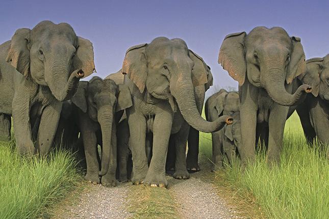 Elefeánt