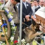 Egy rendőrkutya megható búcsúja társától és legjobb barátjától