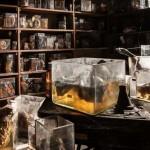 Elhagyatott állatorvosi laboratórium Belgiumban