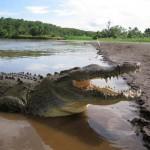 Krokodil túra Costa Ricán