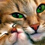 Így látnak a macskák