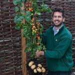 TomTato – paradicsom és krumpli egy növényen