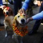 Így ünneplik a kutyákat Nepálban